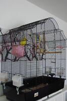 Grande cage avec deux perruches
