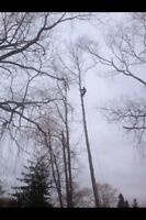 Tree & limb removal, chipping services insured free quotes