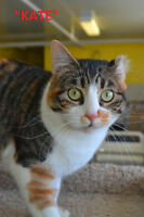 LETHBRIDGE & DISTRICT HUMANE SOCIETY - 57 ADOPTABLE CATS