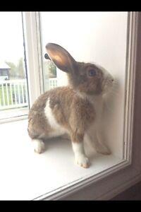 Beautiful Blue eyed rabbit