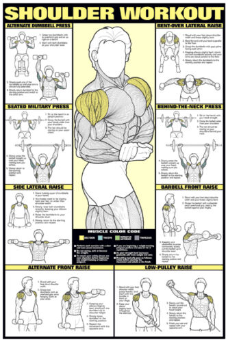 SHOULDER WORKOUT WALL CHART Professional Strength Training ...