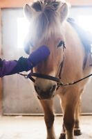 Love Horses?  Volunteer at Hope Haven Therapeutic Riding Centre