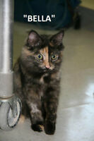 LETHBRIDGE & DISTRICT HUMANE SOCIETY - *OVERFLOWING WITH 57 CATS