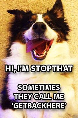 Funny Dog Meme Fridge Toolbox Magnet (2 x 3) Call Me Stopthat Getbackhere Humor