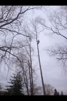Tree & limb removal, chipping, lot clearing insured free quotes