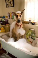 Dog Grooming for Large Breed Dogs