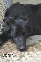 LETHBRIDGE & DISTRICT HUMANE SOCIETY - 6 ADOPTABLE DOGS!!!!!!!!!
