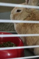 Dwarf bunny to good home