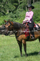 LF Part Boarder for Gorgeous 15.1hh Quarter Horse mare