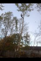 Tree & limb removal services, chipper services insured free est