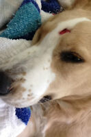 5 month old dog in need of financial assistance for surgery