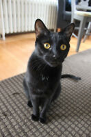 Looking for home for lovely black kitty, food and litter incl.
