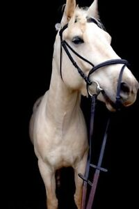WB sized english bridle. Come with rubber reins and bit.
