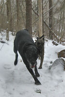 Wolfville and Area Pet Sitting and Dog Walking