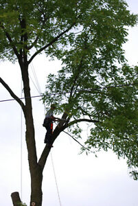 **TREECUTTER ** Tree removal and trimming of trees stump hedge Kitchener / Waterloo Kitchener Area image 3