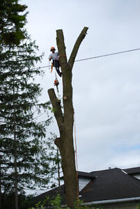 **TREECUTTER ** Tree removal and trimming of trees stump hedge Kitchener / Waterloo Kitchener Area image 2