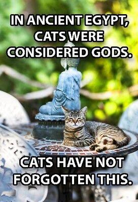 - Funny Cat Meme Refrigerator Magnet (2 x 3) Gods Egypt Buddha Regal Collectible