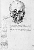 Leonardo Da Vinci Front View Of A Skull Anatomy Poster Print Art -  - ebay.co.uk