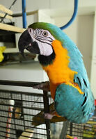 Parrots and Only Parrots- Parrot Boarding 'too Crazy Birdy Hotel