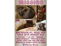Female cat lost! REWARD FOR HER SAFE RETURN
