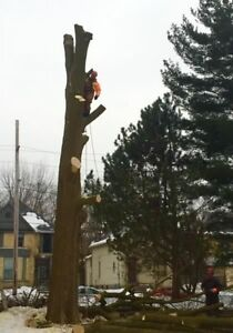 Tree removal services  London Ontario image 9