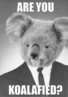 Are you KOALAFIED? Retail Experience Wanted