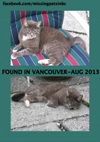 Missing cat from 2013 - Vancouver