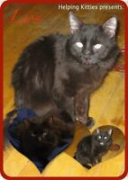 Sweet black cats to donate