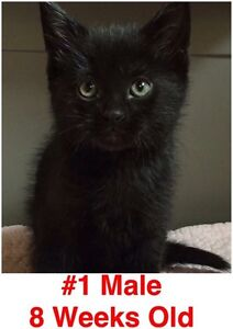 Rescue Kitties! Spayed/Neutered, Vaccinated, Dewormed!