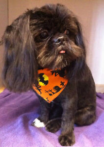 The Bow Wow Grooming Boutique with over 26 years experience London Ontario image 3
