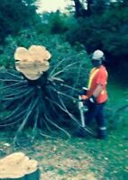 Chainsaw operator looking for tree / clean up jobs