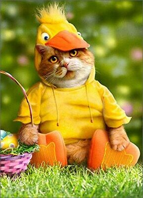 Cat In Duck Costume Funny Easter Card - Greeting Card by Avanti Press