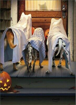 Funny Halloween Dogs (3 Dogs Trick Or Treating Funny Halloween Card - Greeting Card by Avanti)