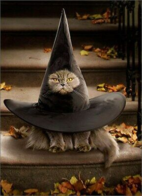 Cat Inside Witch Hat Funny Halloween Card - Greeting Card by Avanti Press - Halloween Card Animated