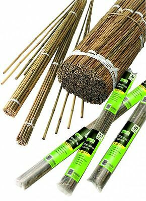 """Bamboo Canes 1.5m (4ft 11"""") Long Pack 10 Sticks Rods Garden Wood Plant Support"""