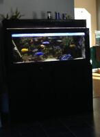 100 gallon aquarium and stand