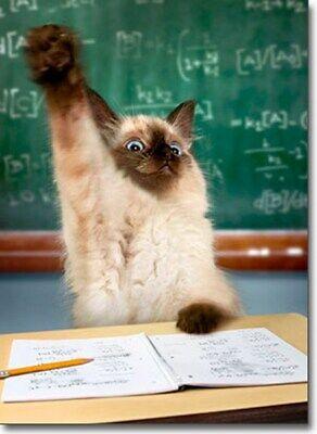 Cat Raising Hand Funny Graduation Card - Greeting Card by Avanti Press