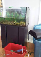 15 Gallon Fish tank + various accessories