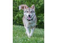 Experience Animal Caretaker/Dog Behaviour Specialist