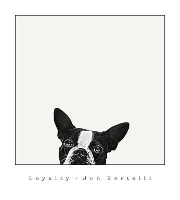 DOG ART PRINT - Loyalty by Jon Bertelli (Boston Terrier) 18x20 Poster
