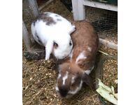 Friendly rabbits looking for a good home.