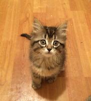 Adorable Kittens for Adoption