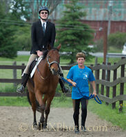 Barn labour - Riding Instructor - Therapy Riding