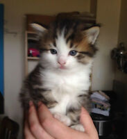 4 kittens to a loving forever home