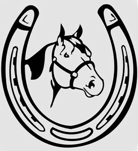 Experienced Reliable Farrier Stratford Kitchener Area image 1