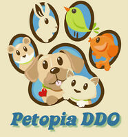 petopia: home boarding/doggy daycare/ CAGE FREE/ all sizes