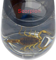 NEW COMPUTER MOUSE WITH REAL SCORPION INSIDE - Very Scary !!!