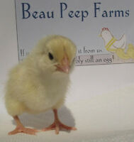 Beau Peep farms Avl Apr 11 and later