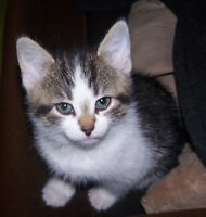 Chatons a vendre / kittens for sale