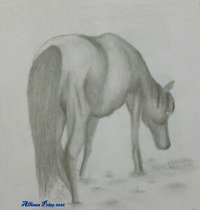 Learn how to draw Animals St. John's Newfoundland image 3